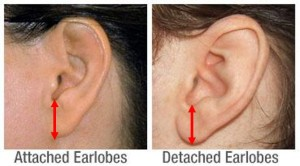 Attached & Unattached Earlobes with Hoop Measuring Arrows
